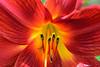 Flower middle focus