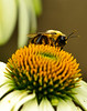 Bee on top of flower