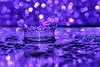 Purple Crown and reflection