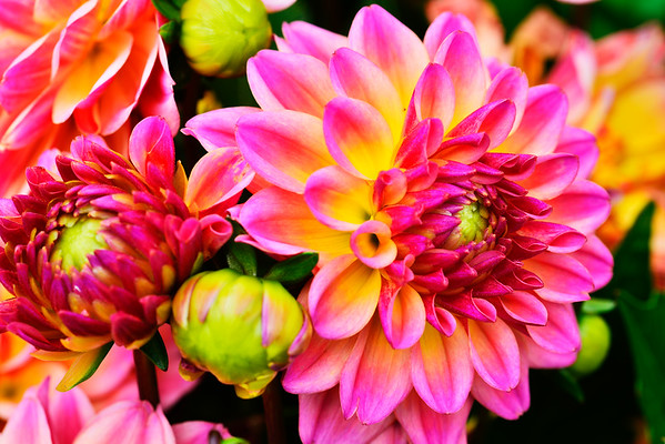 Rainbow of colors in flowers