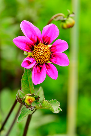 Color photo of FLower