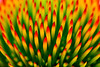 Prickly FLower zoomed in