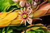 Flower on Cactus with orange stem