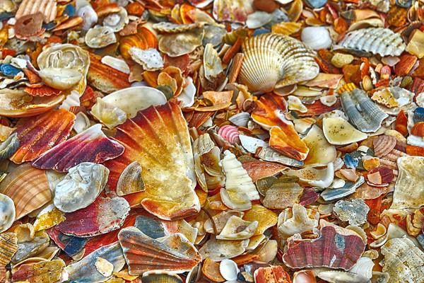 A sea of Shells