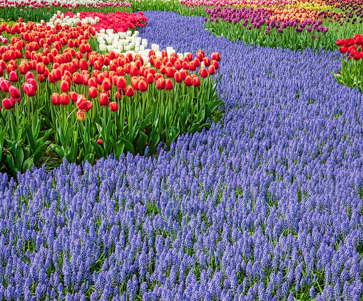 Blue River with Tulip Banks
