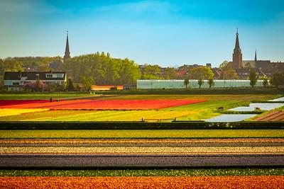 Elsbroek behind tulip fields