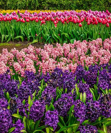 Keukenhof Garden Hyacinths and Tulips
