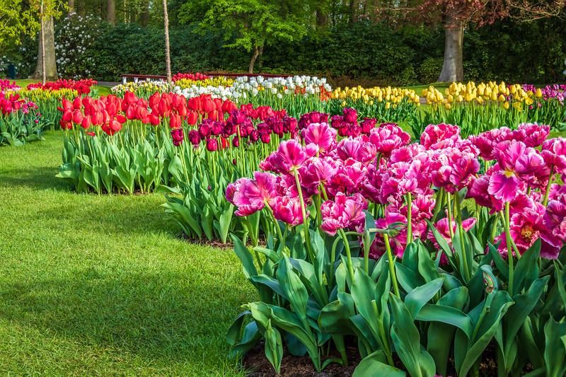 Keukenhof Garden Tulips