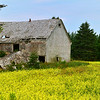 Barn in Canola Field
