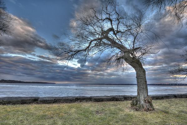 Creeping Tree