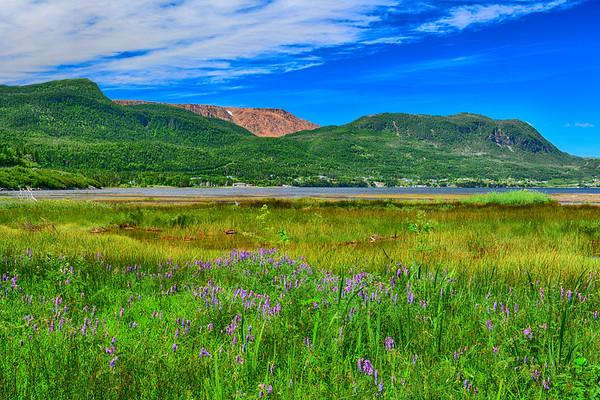 Tablelands and water and wildflowers