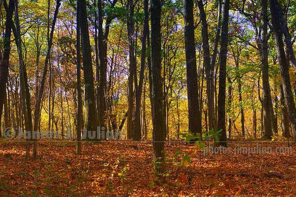 Hiking Trail in Fall