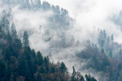 2010-05-03_Great Smokey Mountains NP_Zwit_0008