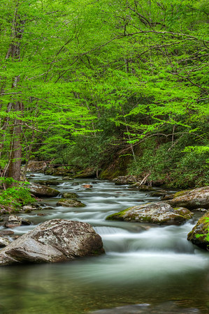 2010-05-02_Straight Fork PM GSMNP_Zwit_0191_tonemapped