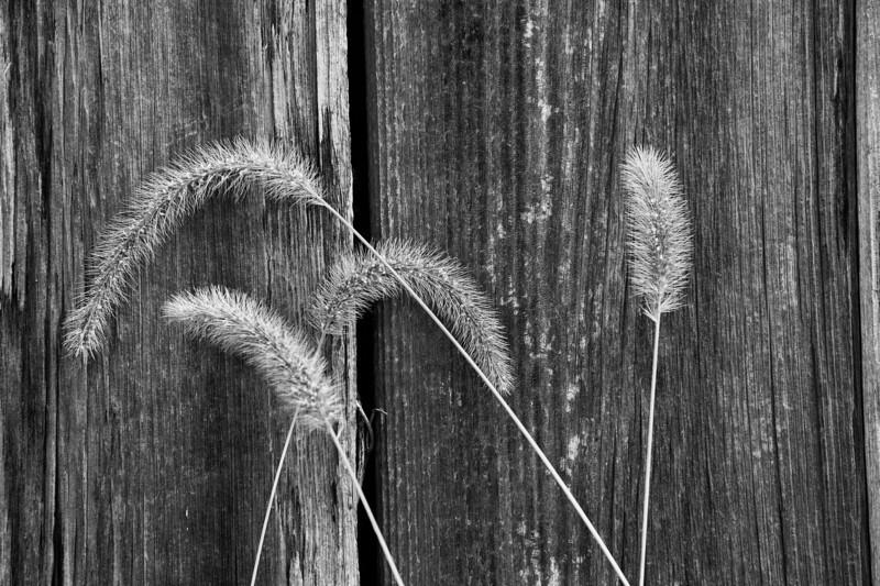 2010-09-22_Shenandoah National Park_Zwit_0025-Edit