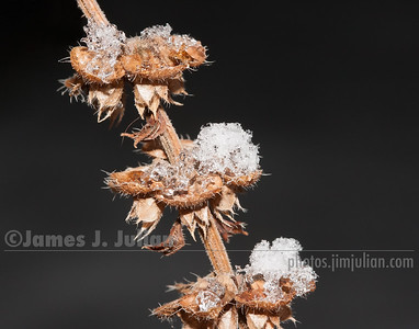 Dormant Plant First Snowfall