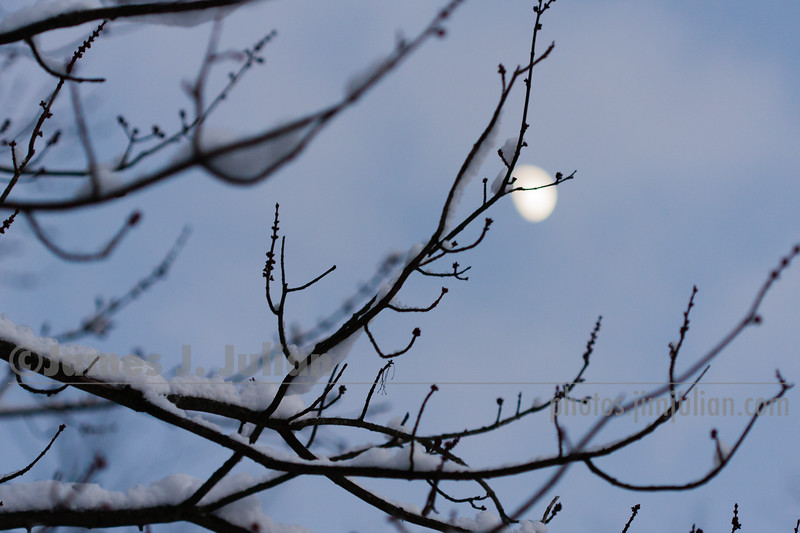 Moonrise Over the Snowy Branches