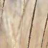 close-up image of reeds fluttering in the wind