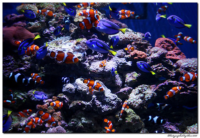 aquarium, long beach