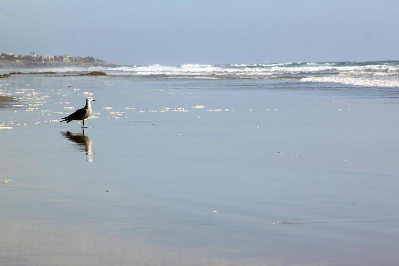 seagull II