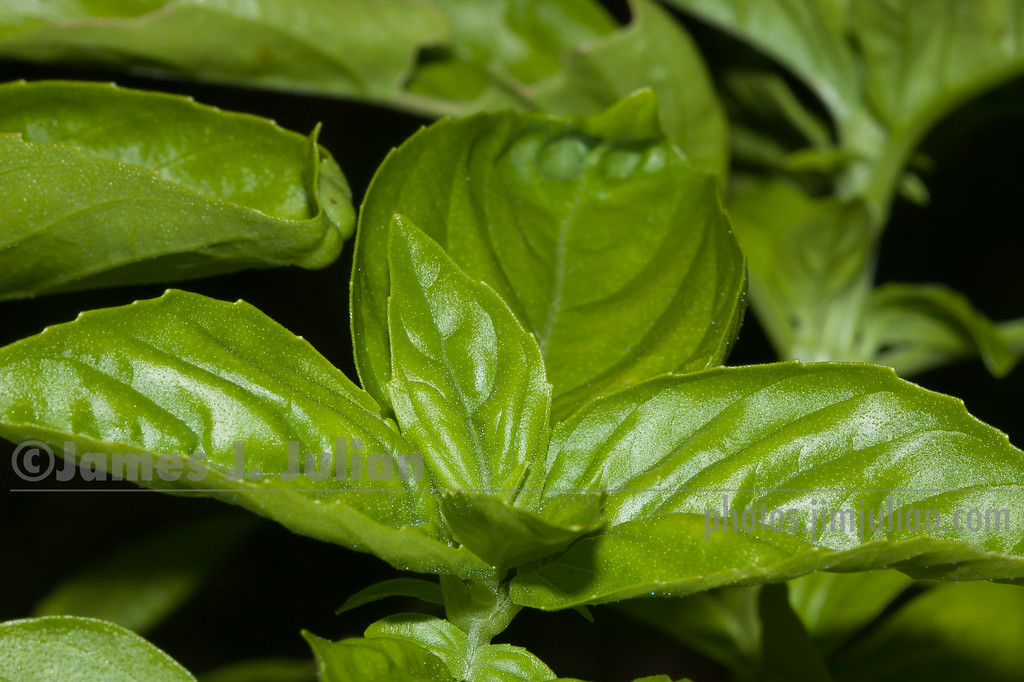 Smell the Basil