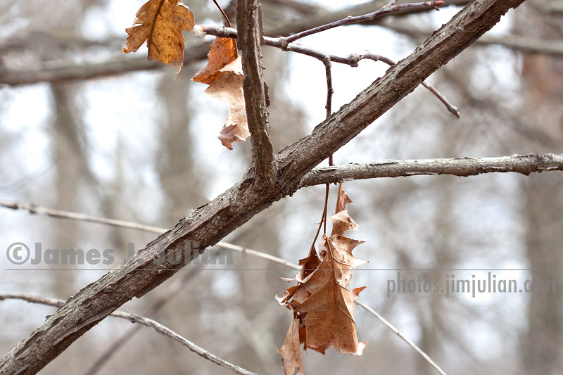 Remnants of Leaves