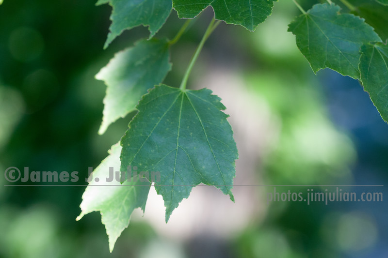 Gentle Summer Leaves 3