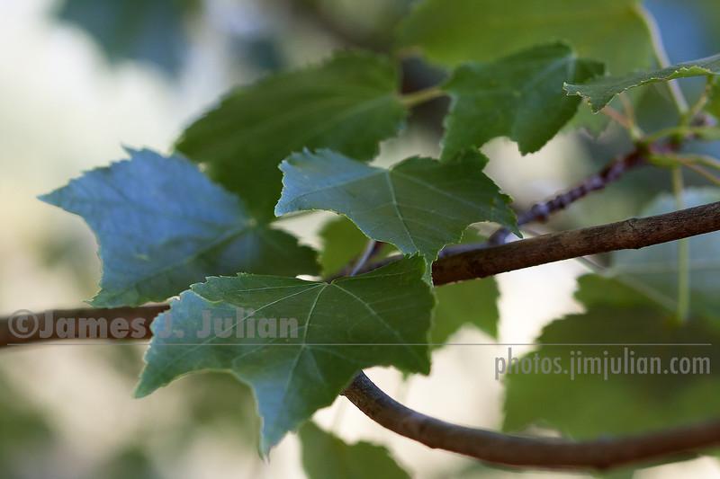 Gentle Summer Leaves 2