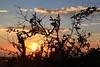 sunset011