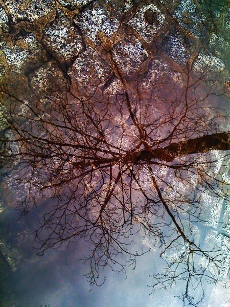 treeflected