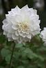 waning blossom 2