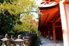 lanterns...there are over 2000 stone lanterns at the Kasuga-taisha shrine