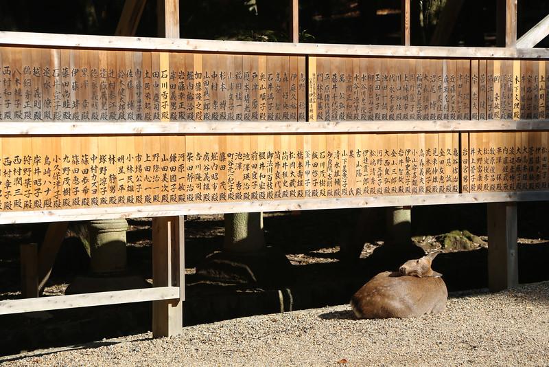 names of donors to the Kasuga-taisha Shrine (and one of Nara's famous deer)