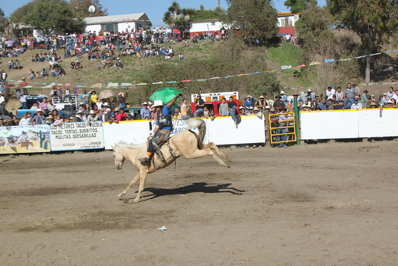 rodeo 15