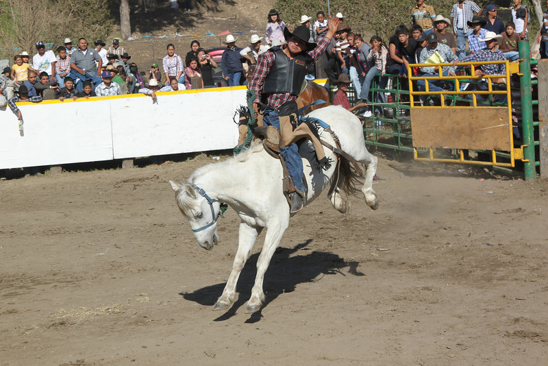 rodeo 11