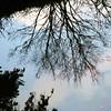 reflecting fish