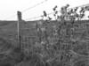 iona fence