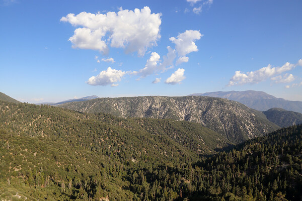 San Bernarnino National Forest