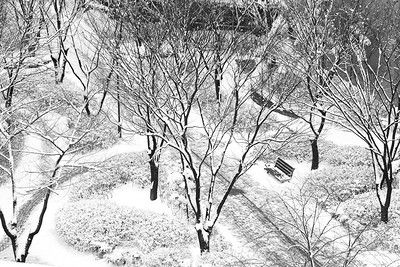 One snowy morning in South Korea