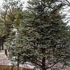Tree for Christmas
