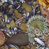 I believe it is a sea anemone.