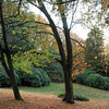fall colors at Volunteer Park, Seattle Washington