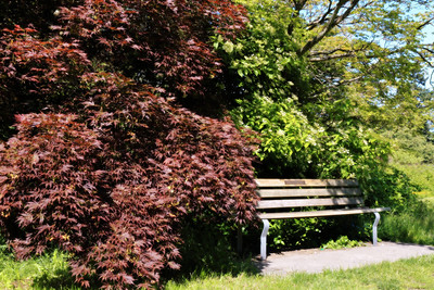 A bench at Queen Elizabeth Park, Vancouver Canada