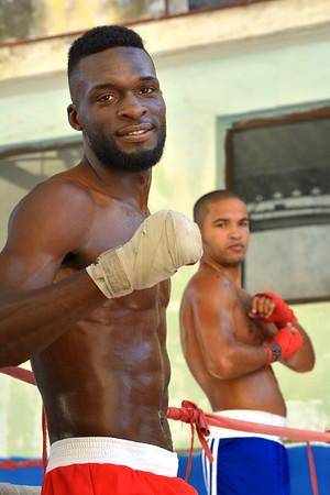 Posing Boxer