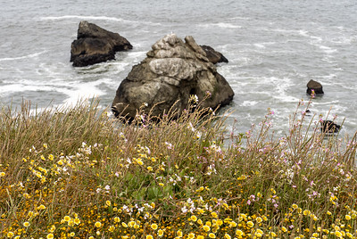 Wildflowers on Mori Point
