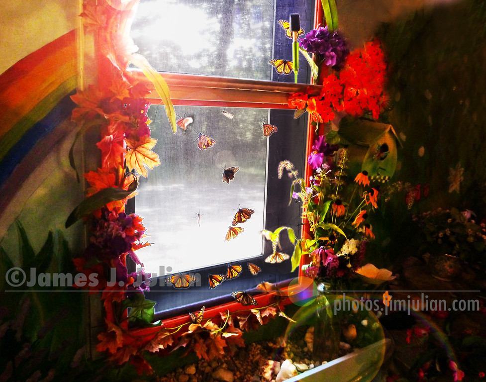 Butterflies at the Window