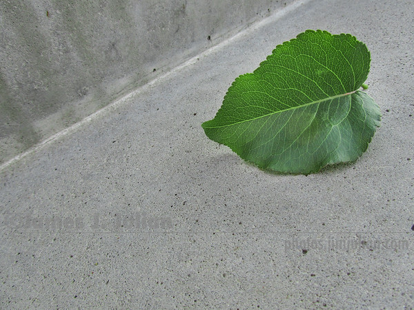 Leaf on Concrete Stairs 2