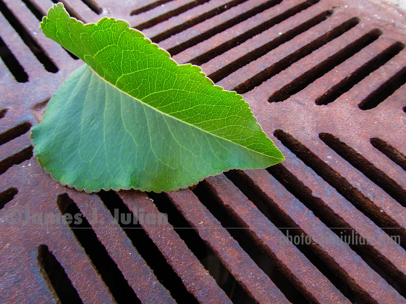 Leaf on Iron Grate 2