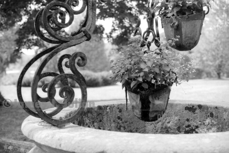 well Bucket Plants Close BW