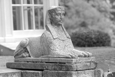 Marble Sphinx Tighter BW